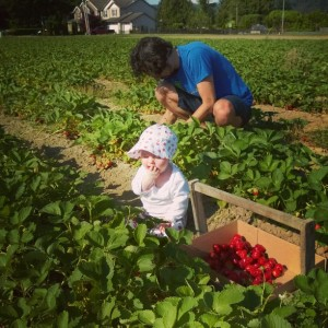 I'm helping! #harvoldberryfarm